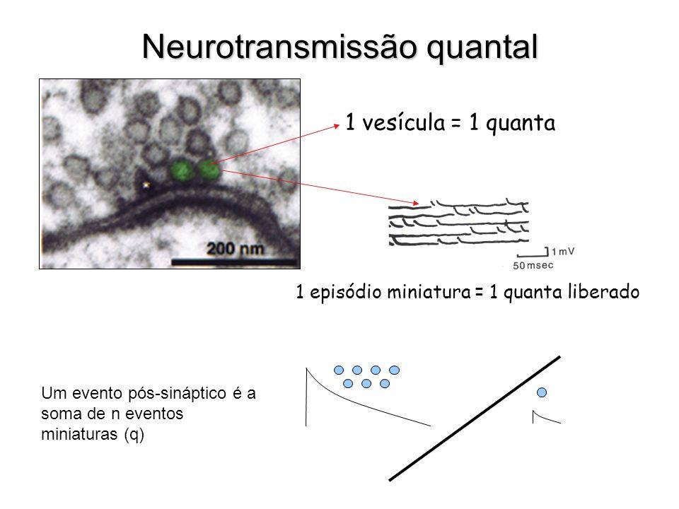 Neurotransmissão quantal 1 vesícula = 1 quanta 1 episódio miniatura = 1 quanta liberado Um evento pós-sináptico é a soma de n eventos miniaturas (q)