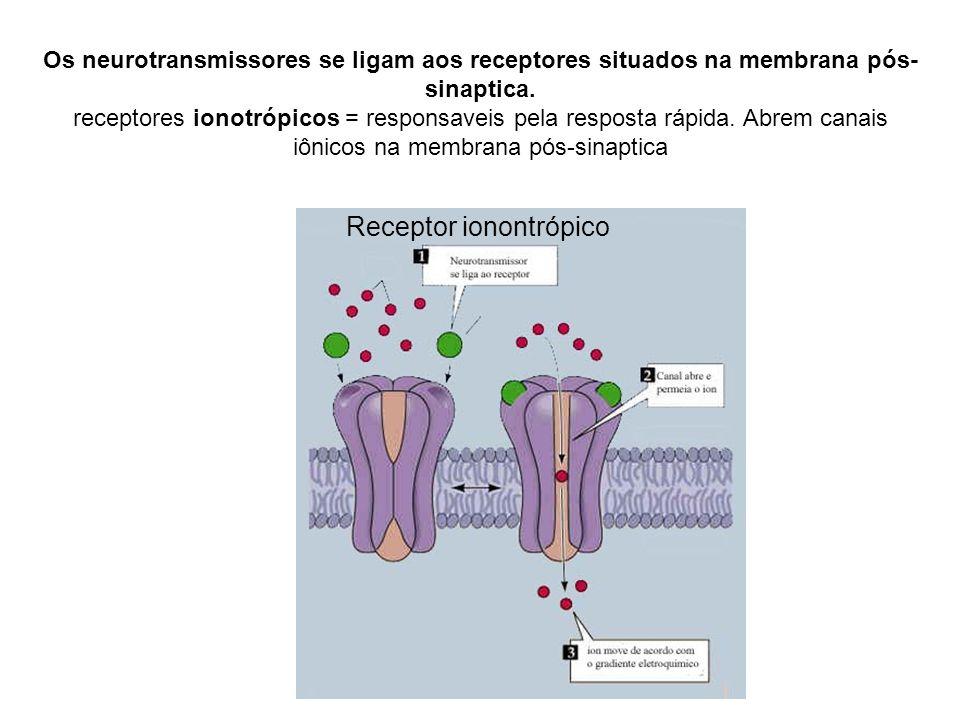 Os neurotransmissores se ligam aos receptores situados na membrana pós- sinaptica. receptores ionotrópicos = responsaveis pela resposta rápida. Abrem