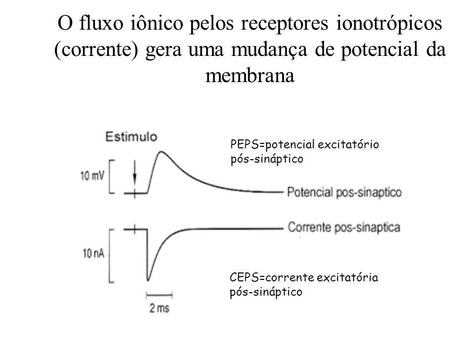 O fluxo iônico pelos receptores ionotrópicos (corrente) gera uma mudança de potencial da membrana CEPS=corrente excitatória pós-sináptico PEPS=potenci