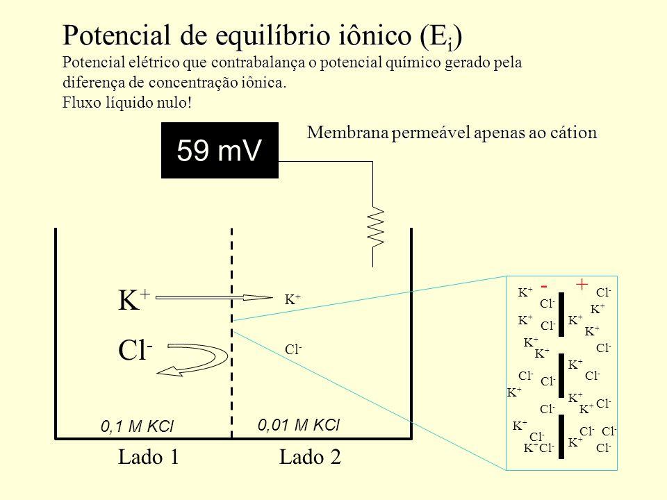 Potencial de equilíbrio iônico (E i ) Potencial elétrico que contrabalança o potencial químico gerado pela diferença de concentração iônica. Fluxo líq