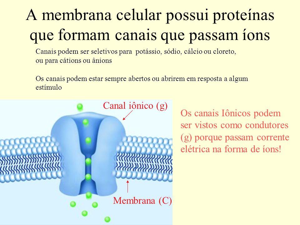 A membrana celular possui proteínas que formam canais que passam íons Canal iônico (g) Membrana (C) Canais podem ser seletivos para potássio, sódio, c