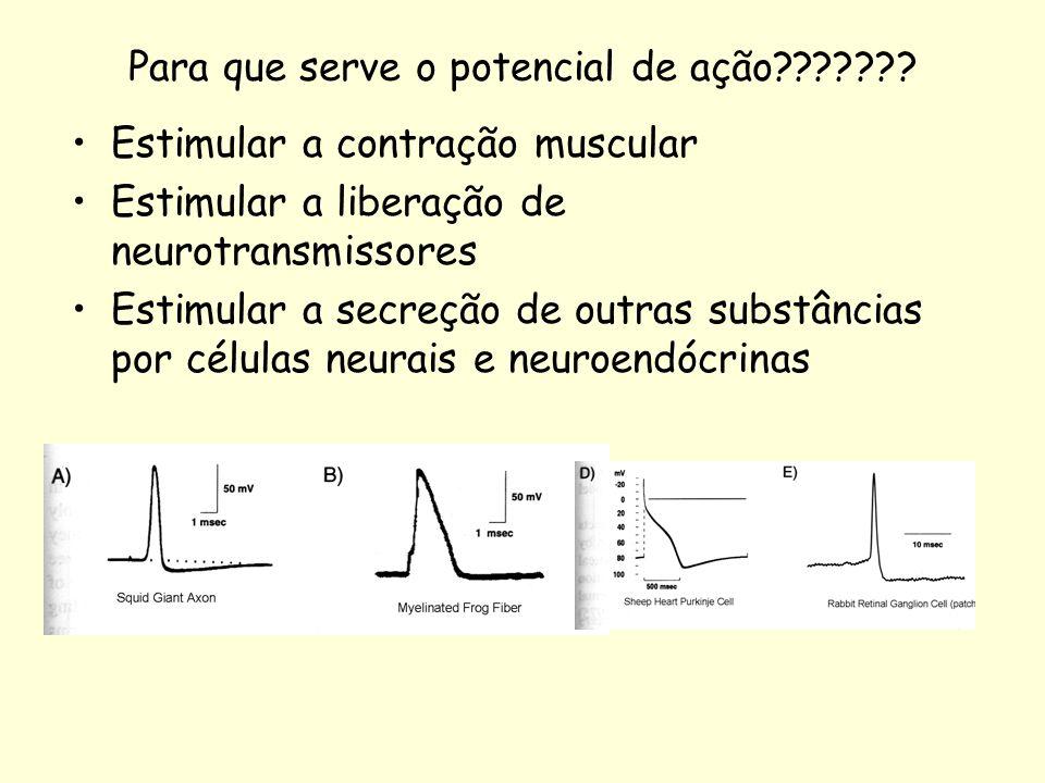 Para que serve o potencial de ação??????? Estimular a contração muscular Estimular a liberação de neurotransmissores Estimular a secreção de outras su