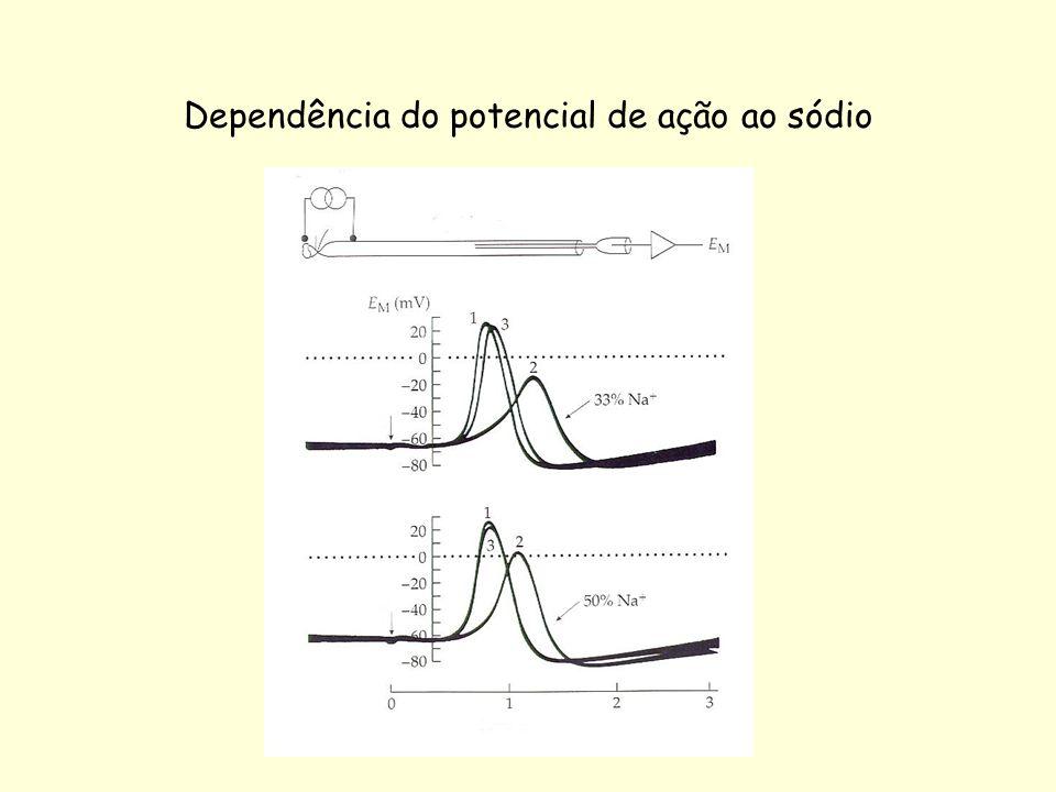 Dependência do potencial de ação ao sódio