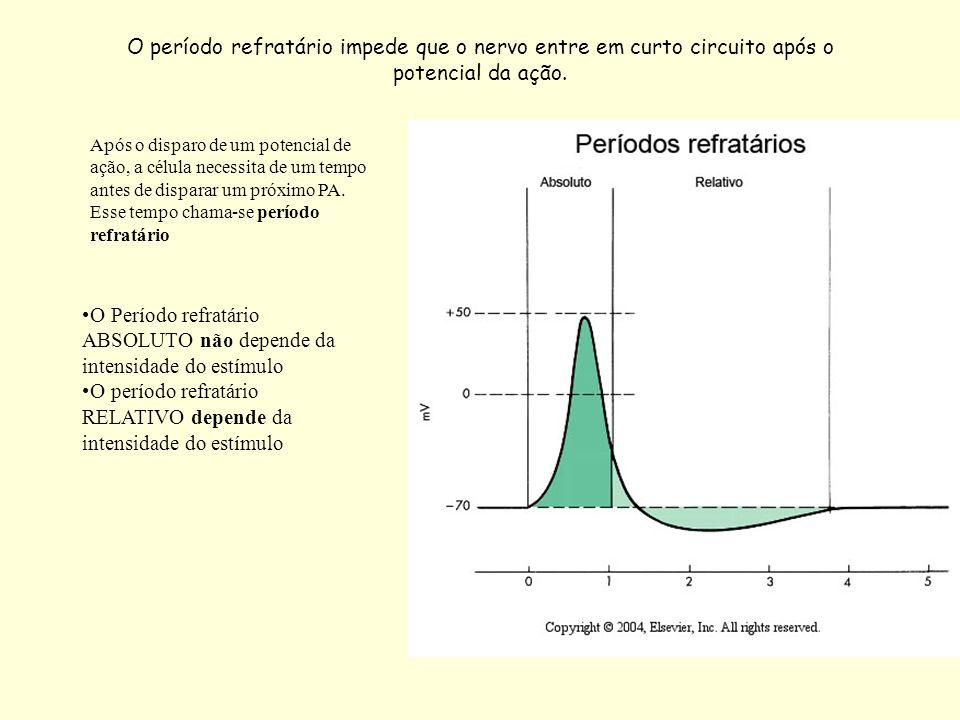 O período refratário impede que o nervo entre em curto circuito após o potencial da ação. Após o disparo de um potencial de ação, a célula necessita d