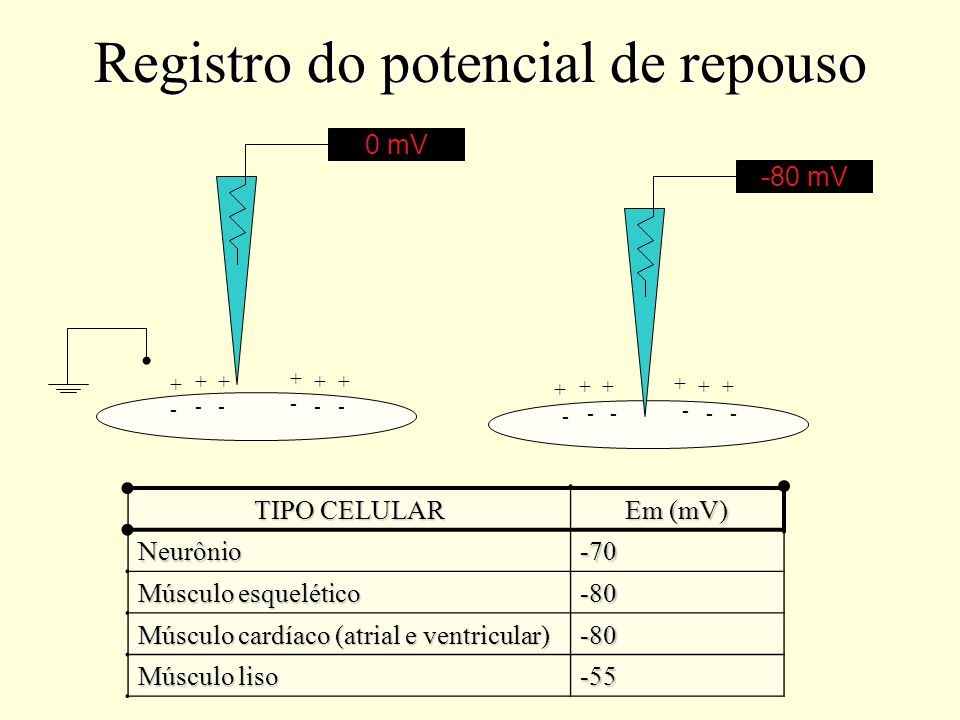 Registro do potencial de repouso -80 mV0 mV + ++ + + + - -- - - - + ++ + + + - -- - - - TIPO CELULAR Em (mV) Neurônio-70 Músculo esquelético -80 Múscu