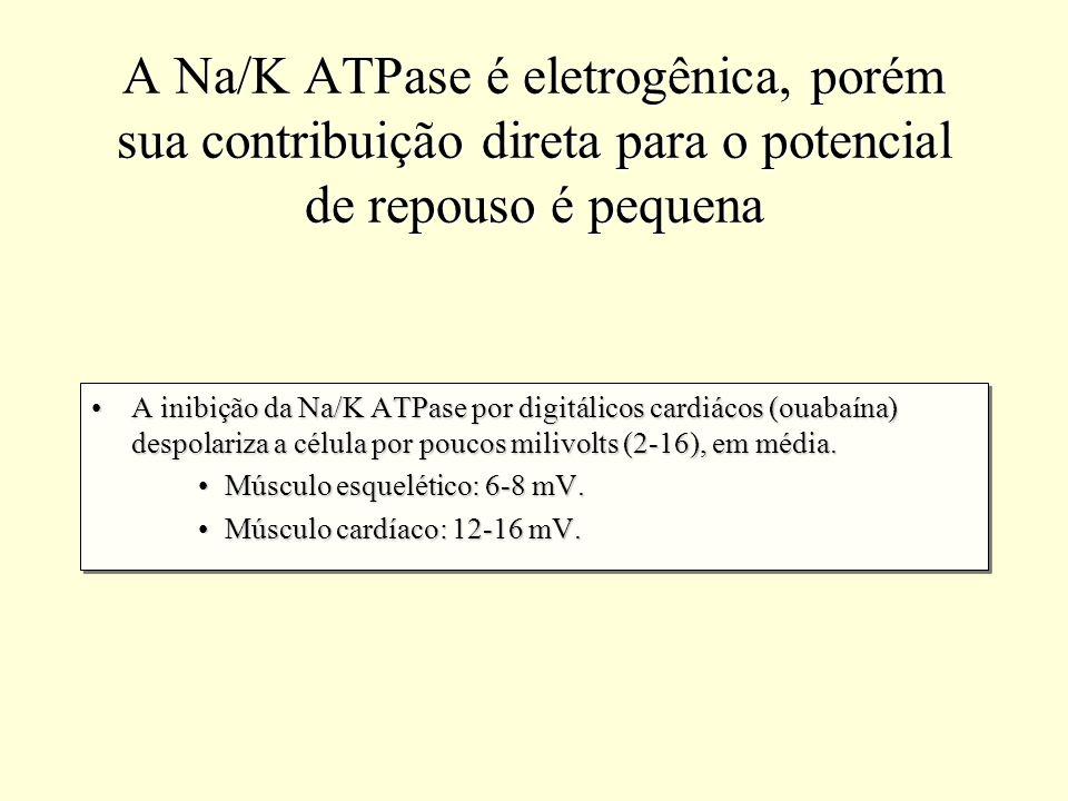 A Na/K ATPase é eletrogênica, porém sua contribuição direta para o potencial de repouso é pequena A inibição da Na/K ATPase por digitálicos cardiácos
