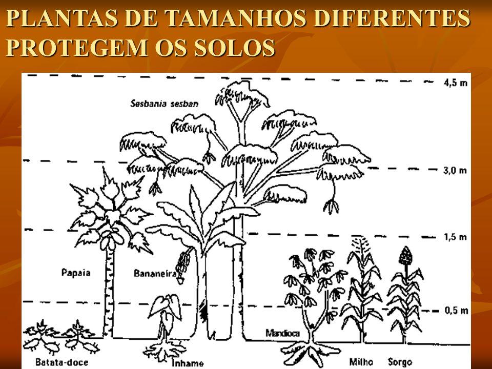 PLANTAS DE TAMANHOS DIFERENTES PROTEGEM OS SOLOS