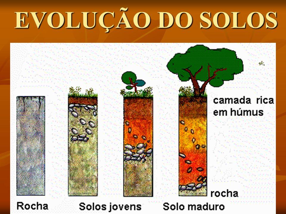 COMPONENTES DO SOLO COMPONENTES DO SOLO Componentes sólidos: Os minerais e a matéria orgânica.