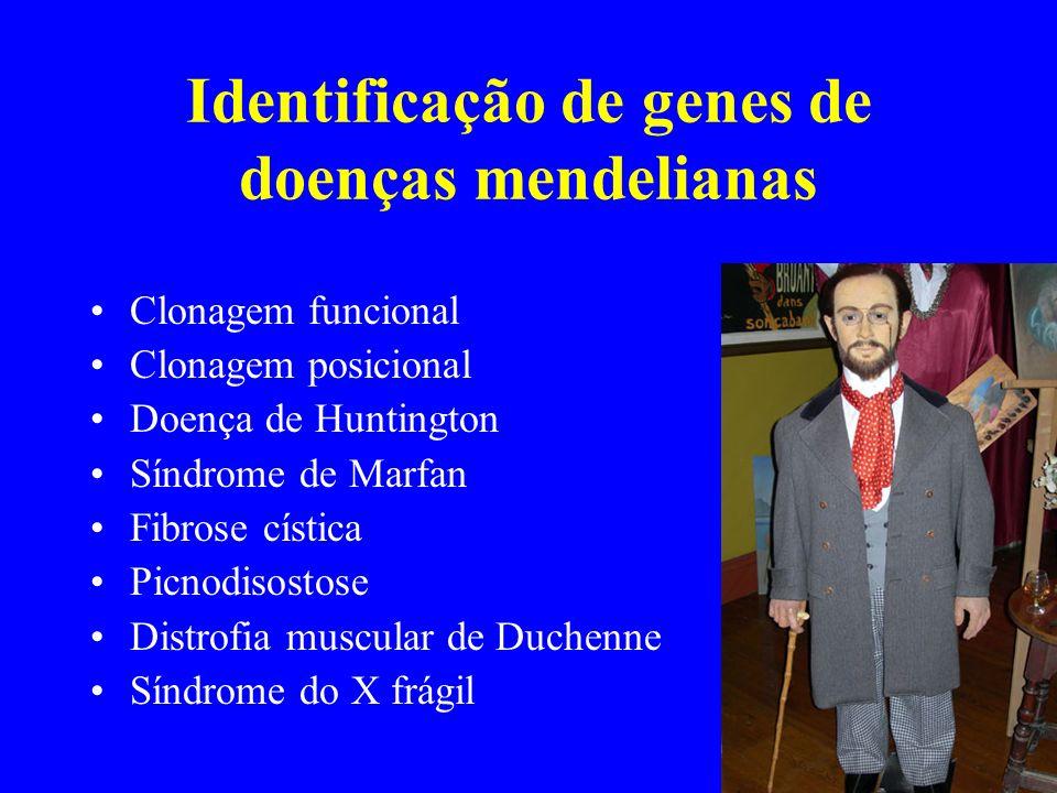 Identificação de genes de doenças mendelianas Clonagem funcional Clonagem posicional Doença de Huntington Síndrome de Marfan Fibrose cística Picnodiso