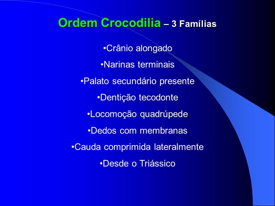 Ordem Crocodilia – 3 Famílias Crânio alongado Narinas terminais Palato secundário presente Dentição tecodonte Locomoção quadrúpede Dedos com membranas
