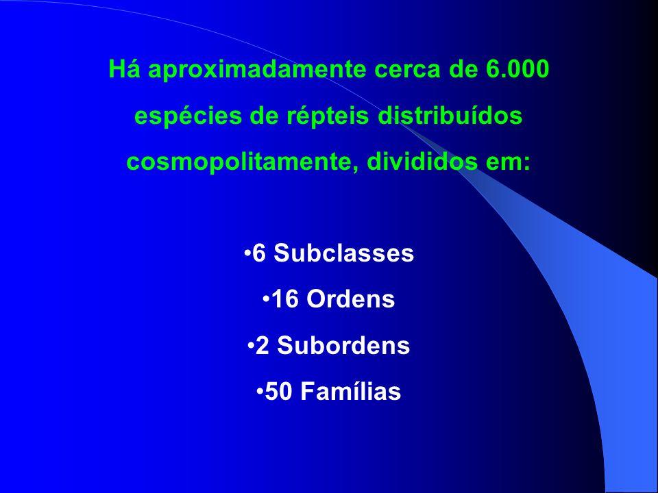 Há aproximadamente cerca de 6.000 espécies de répteis distribuídos cosmopolitamente, divididos em: 6 Subclasses 16 Ordens 2 Subordens 50 Famílias