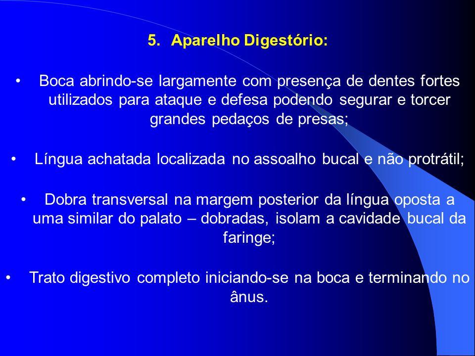 5.Aparelho Digestório: Boca abrindo-se largamente com presença de dentes fortes utilizados para ataque e defesa podendo segurar e torcer grandes pedaç