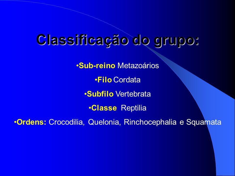Classificação do grupo: Sub-reino Metazoários Filo Cordata Subfilo Vertebrata Classe Reptilia Ordens: Crocodilia, Quelonia, Rinchocephalia e Squamata