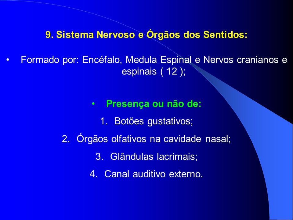 9. Sistema Nervoso e Órgãos dos Sentidos: Formado por: Encéfalo, Medula Espinal e Nervos cranianos e espinais ( 12 ); Presença ou não de: 1.Botões gus