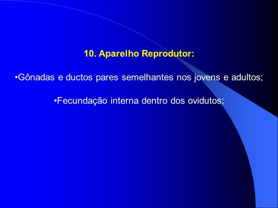 10. Aparelho Reprodutor: Gônadas e ductos pares semelhantes nos jovens e adultos; Fecundação interna dentro dos ovidutos;