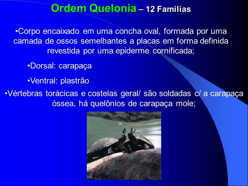 Ordem Quelonia – 12 Famílias Corpo encaixado em uma concha oval, formada por uma camada de ossos semelhantes a placas em forma definida revestida por
