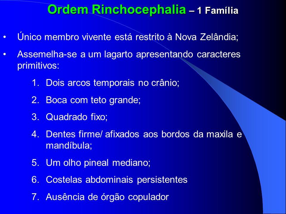 Ordem Rinchocephalia – 1 Família Único membro vivente está restrito à Nova Zelândia; Assemelha-se a um lagarto apresentando caracteres primitivos: 1.D