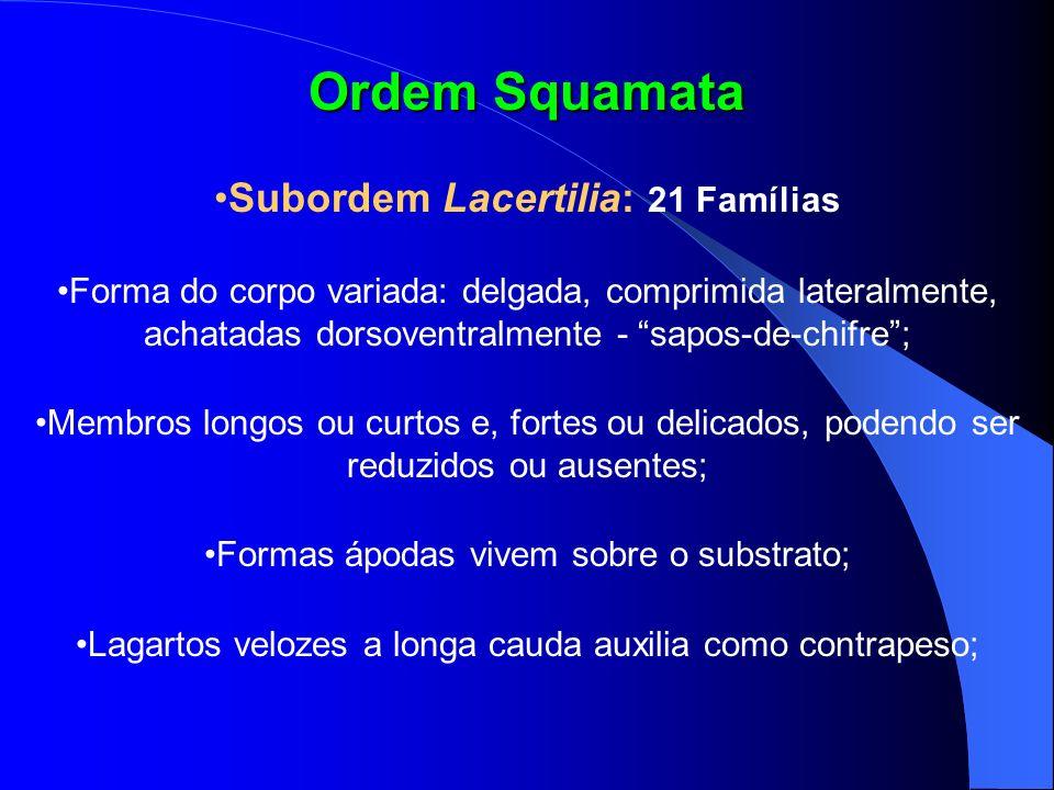 Ordem Squamata Subordem Lacertilia: 21 Famílias Forma do corpo variada: delgada, comprimida lateralmente, achatadas dorsoventralmente - sapos-de-chifr