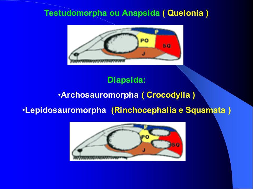 Testudomorpha ou Anapsida ( Quelonia ) Diapsida: Archosauromorpha ( Crocodylia ) Lepidosauromorpha (Rinchocephalia e Squamata )