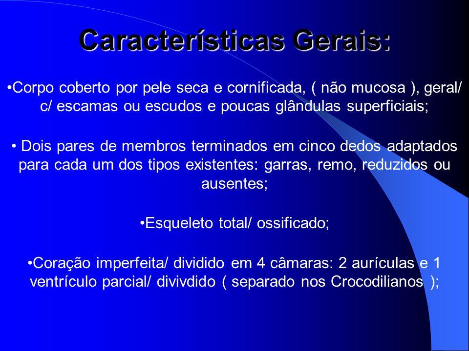 Características Gerais: Corpo coberto por pele seca e cornificada, ( não mucosa ), geral/ c/ escamas ou escudos e poucas glândulas superficiais; Dois
