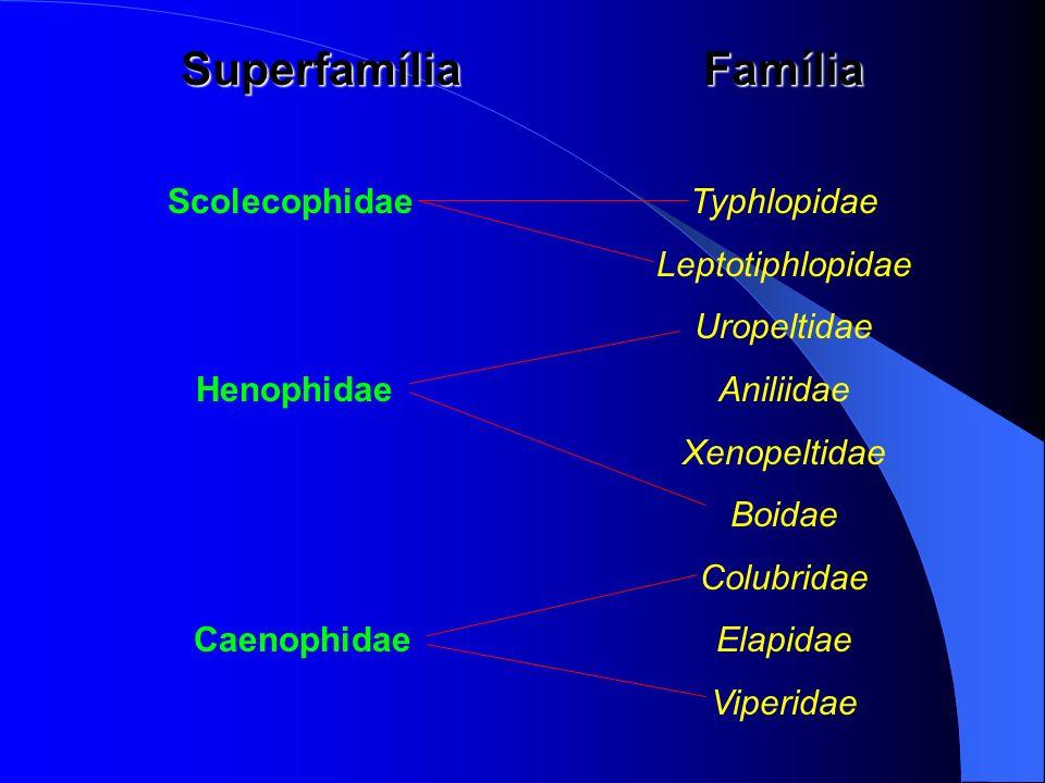 SuperfamíliaFamília ScolecophidaeTyphlopidae Leptotiphlopidae Uropeltidae Henophidae Aniliidae Xenopeltidae Boidae Colubridae CaenophidaeElapidae Vipe