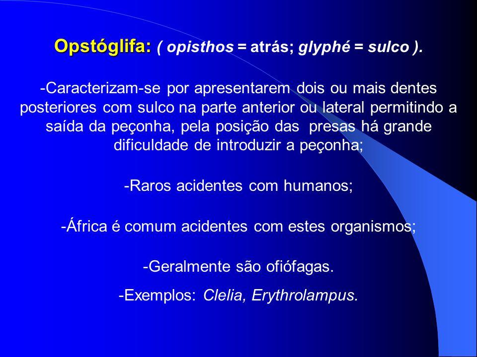 Opstóglifa: Opstóglifa: ( opisthos = atrás; glyphé = sulco ). -Caracterizam-se por apresentarem dois ou mais dentes posteriores com sulco na parte ant