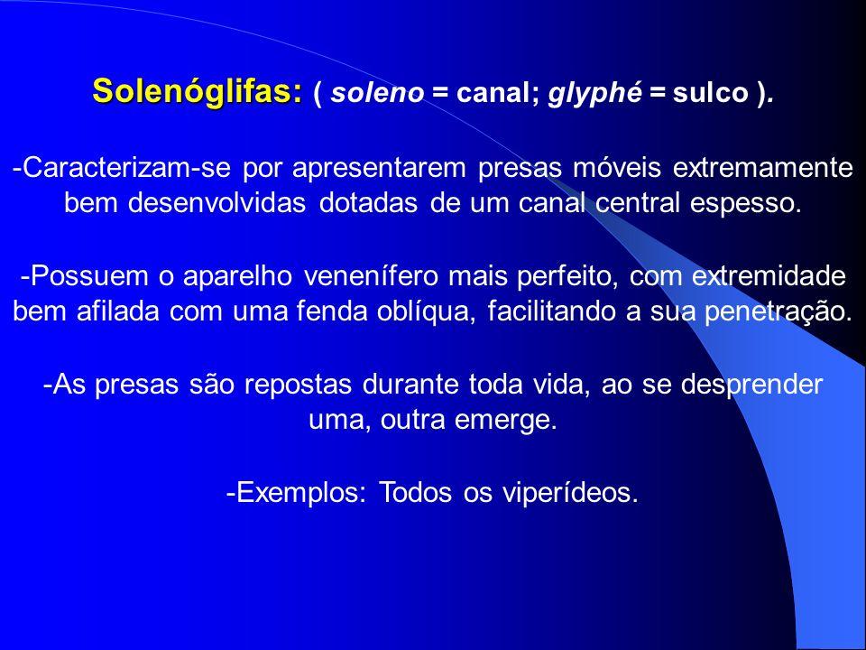 Solenóglifas: Solenóglifas: ( soleno = canal; glyphé = sulco ). -Caracterizam-se por apresentarem presas móveis extremamente bem desenvolvidas dotadas