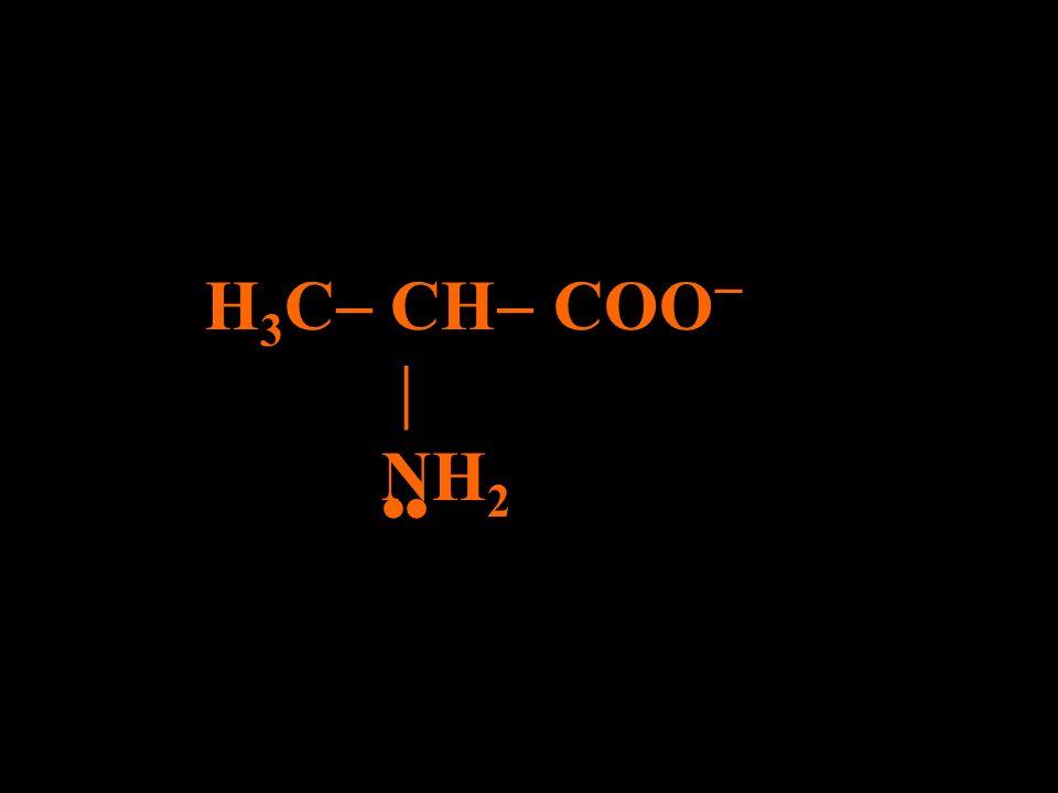 H 3 C CH COO NH 2 H+H+
