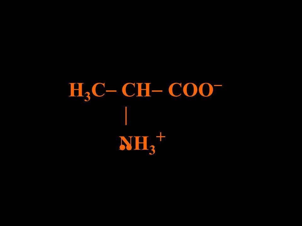 H+H+ H 3 C CH COO NH 2
