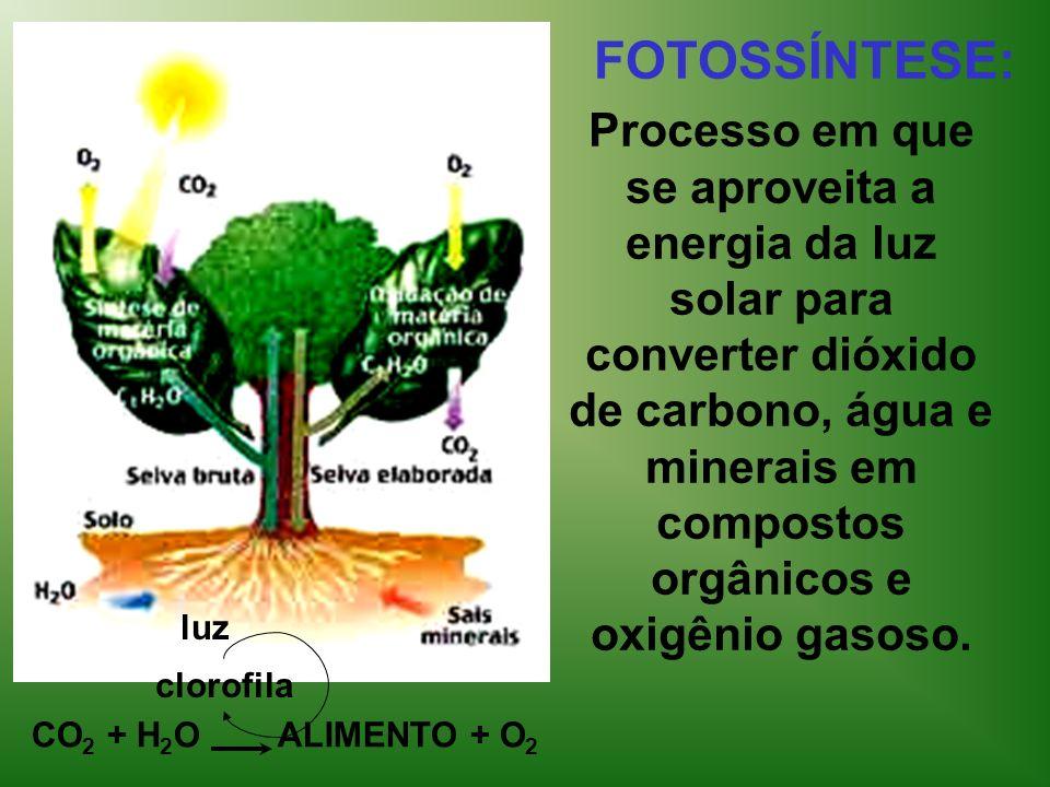 FOTOSSÍNTESE: Processo em que se aproveita a energia da luz solar para converter dióxido de carbono, água e minerais em compostos orgânicos e oxigênio