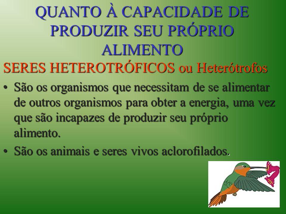 QUANTO À CAPACIDADE DE PRODUZIR SEU PRÓPRIO ALIMENTO SERES HETEROTRÓFICOS ou Heterótrofos São os organismos que necessitam de se alimentar de outros o