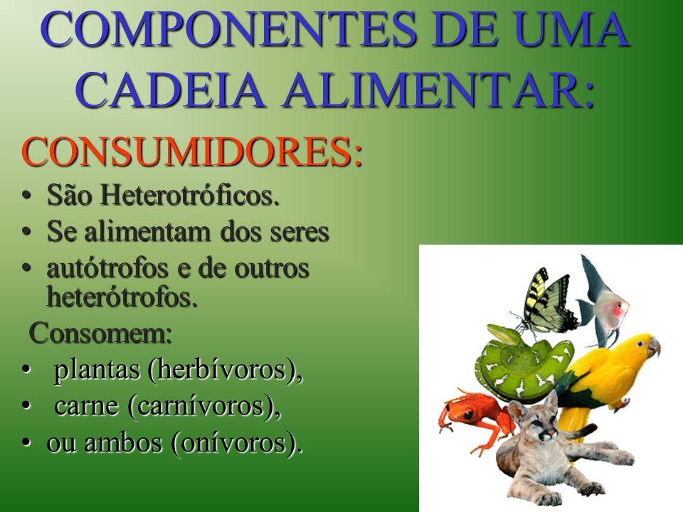 COMPONENTES DE UMA CADEIA ALIMENTAR: CONSUMIDORES: CONSUMIDORES: São Heterotróficos.São Heterotróficos. Se alimentam dos seresSe alimentam dos seres a