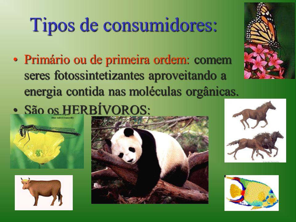 Tipos de consumidores: Primário ou de primeira ordem: comem seres fotossintetizantes aproveitando a energia contida nas moléculas orgânicas.Primário o