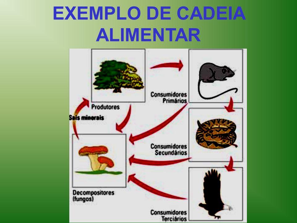 EXEMPLO DE CADEIA ALIMENTAR