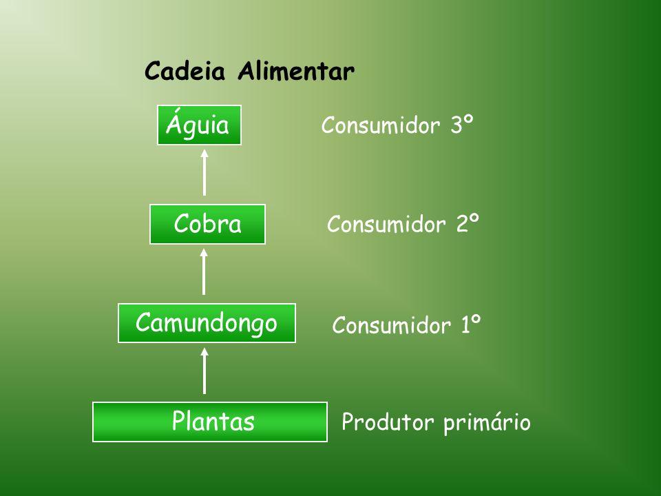Cadeia Alimentar Plantas Camundongo Cobra Águia Produtor primário Consumidor 1º Consumidor 2º Consumidor 3º