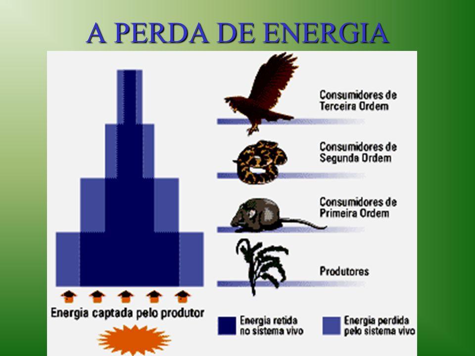 A PERDA DE ENERGIA
