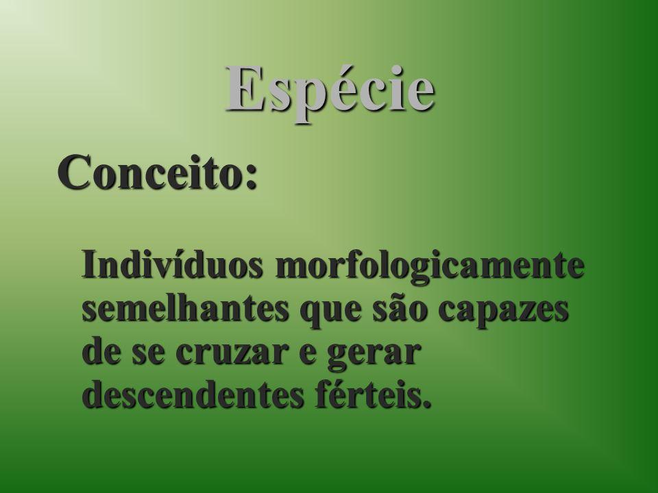 Espécie Conceito: Indivíduos morfologicamente semelhantes que são capazes de se cruzar e gerar descendentes férteis.