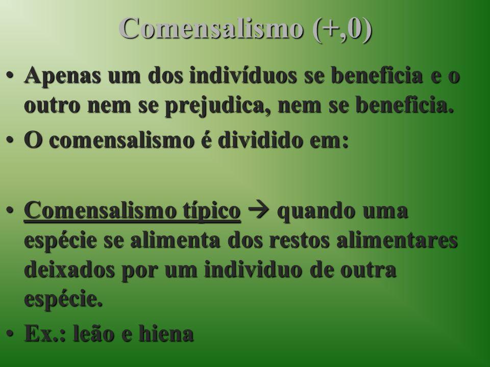 Comensalismo (+,0) Apenas um dos indivíduos se beneficia e o outro nem se prejudica, nem se beneficia.Apenas um dos indivíduos se beneficia e o outro