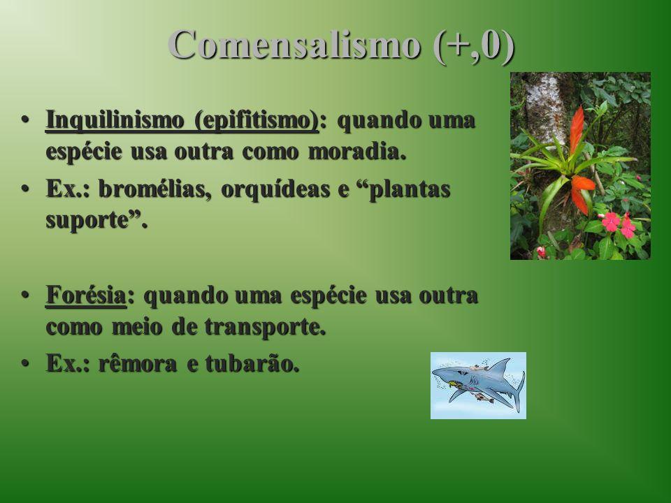 Comensalismo (+,0) Inquilinismo (epifitismo): quando uma espécie usa outra como moradia.Inquilinismo (epifitismo): quando uma espécie usa outra como m