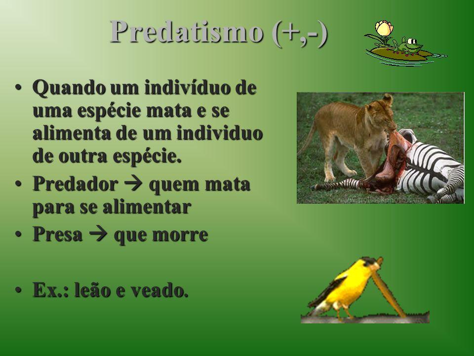 Predatismo (+,-) Quando um indivíduo de uma espécie mata e se alimenta de um individuo de outra espécie.Quando um indivíduo de uma espécie mata e se a