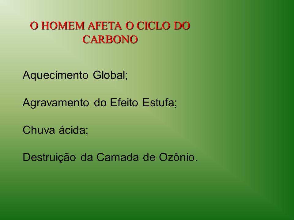 O HOMEM AFETA O CICLO DO CARBONO Aquecimento Global; Agravamento do Efeito Estufa; Chuva ácida; Destruição da Camada de Ozônio.