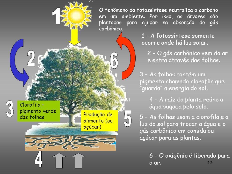 12 O fenômeno da fotossíntese neutraliza o carbono em um ambiente. Por isso, as árvores são plantadas para ajudar na absorção do gás carbônico. 1 – A
