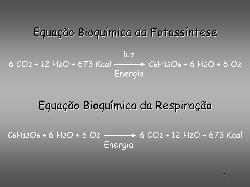 13 Equação Bioquímica da Fotossíntese 6 CO 2 + 12 H 2 O + 673 Kcal C 6 H 12 O 6 + 6 H 2 O + 6 O 2 luz Energia Equação Bioquímica da Respiração C 6 H 1