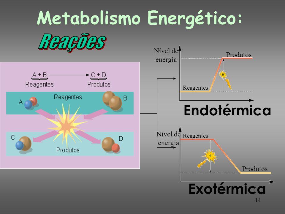 14 Exotérmica Endotérmica Nível de energia Reagentes Produtos Reagentes Produtos Metabolismo Energético: