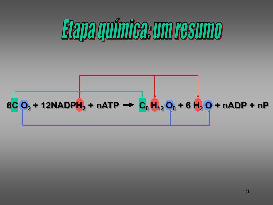 21 6C O 2 + 12NADPH 2 + nATP C 6 H 12 O 6 + 6 H 2 O + nADP + nP