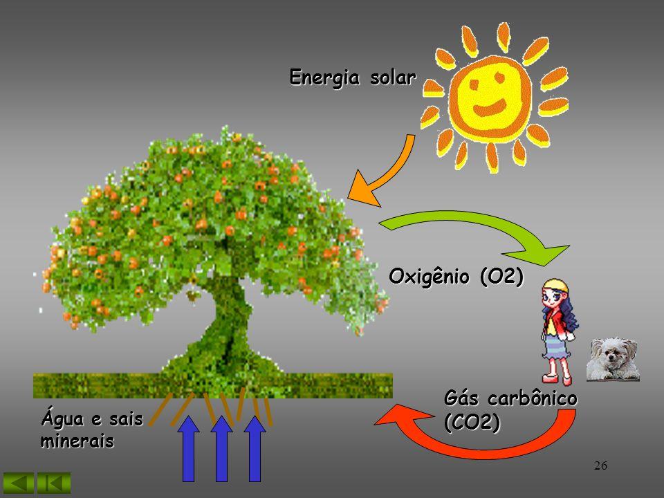 26 Gás carbônico (CO2) Oxigênio (O2) Energia solar Água e sais minerais
