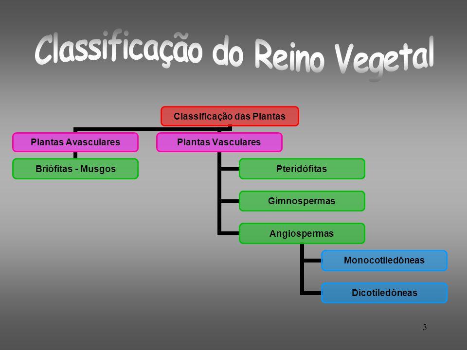 3 Classificação das Plantas Plantas Avasculares Briófitas - Musgos Plantas Vasculares Pteridófitas Gimnospermas Angiospermas Monocotiledôneas Dicotile