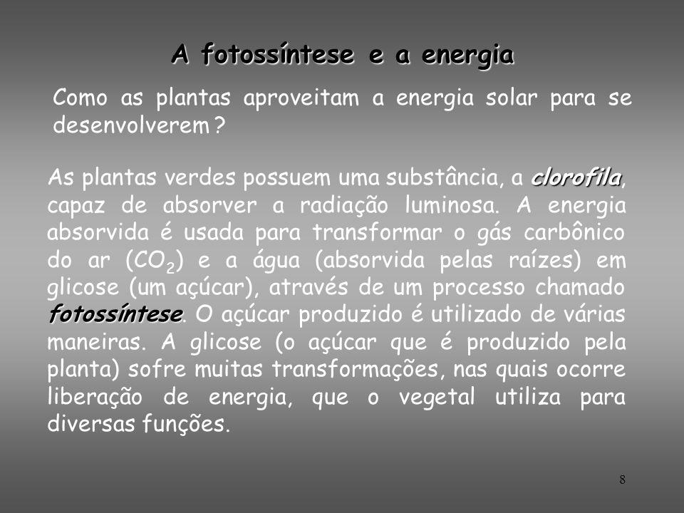 8 clorofila fotossíntese As plantas verdes possuem uma substância, a clorofila, capaz de absorver a radiação luminosa. A energia absorvida é usada par