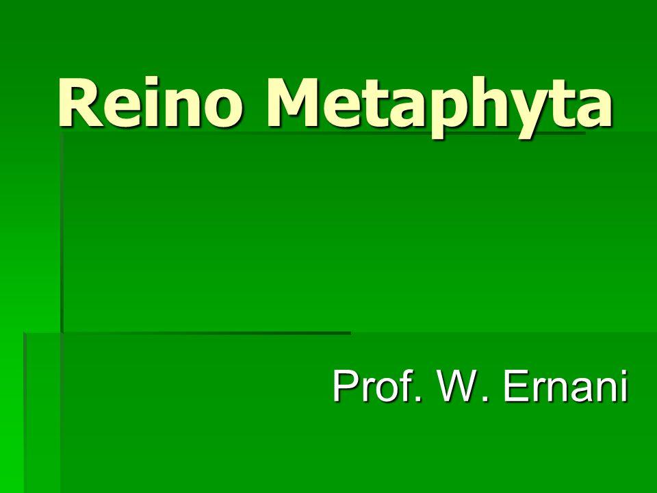 Reino Metaphyta Prof. W. Ernani