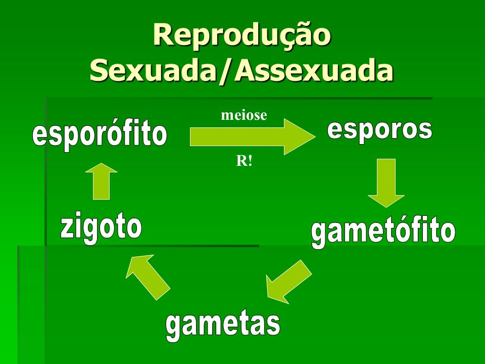 meiose R! Reprodução Sexuada/Assexuada